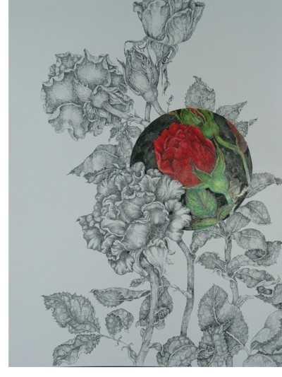 A Rose Bush By Jennifer Kirton