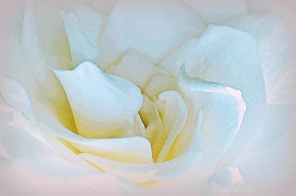 Tanya Tanski - A Rose For An Angel.....