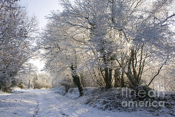 A Sparkling Winter Day Print by Sophie De Roumanie