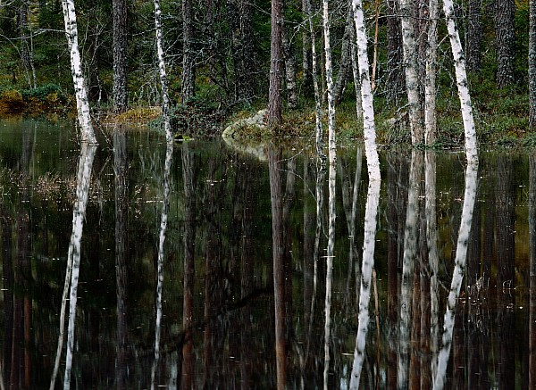 A Stream At High Water In A Woodland Print by Mattias Klum