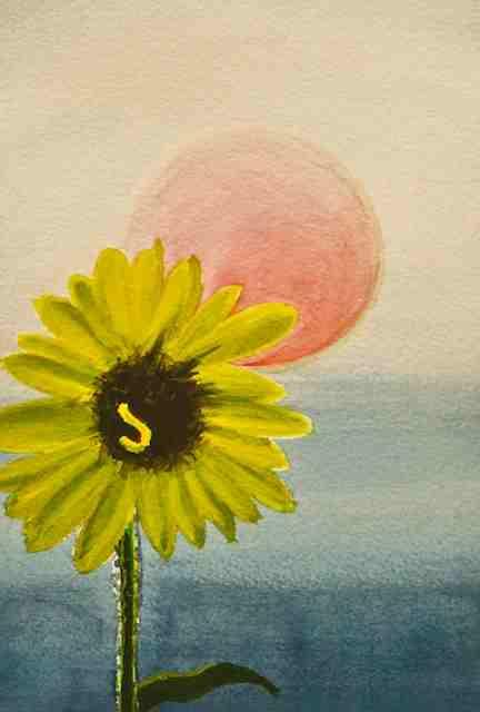 John S Chilcott - A Sunflower Sunset