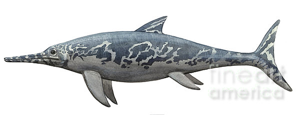 A Temnodontosaurus Burgundiae Print by Sergey Krasovskiy