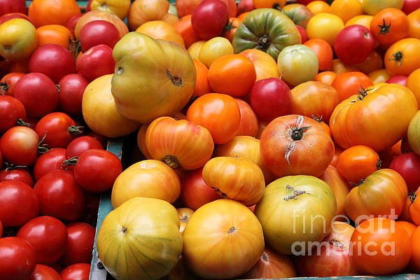 A Variety Of Fresh Tomatoes - 5d17811 Print by Wingsdomain Art and Photography