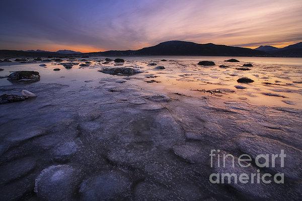 A Winter Sunset At Evenskjer In Troms Print by Arild Heitmann