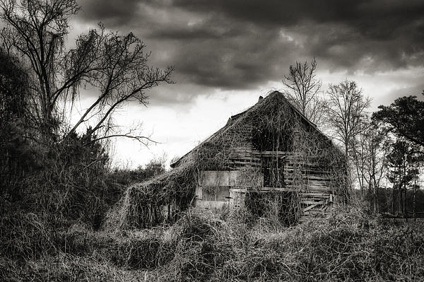 Abandoned Barn Print by Brenda Bryant