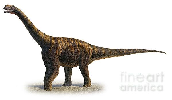 Abrosaurus Dongpoi, A Prehistoric Era Print by Sergey Krasovskiy