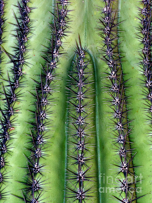 Marlene Burns - ABSTRACT NATCH FOUR...diamonds and cactus