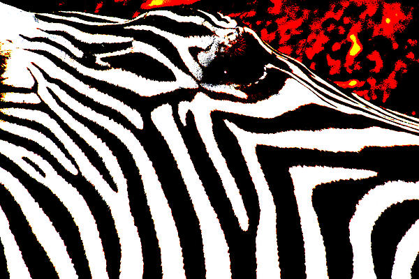Abstract Zebra 001 Print by Lon Casler Bixby