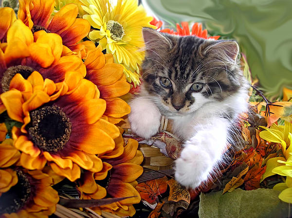 Adorable Baby Animal - Cute Furry Kitten In Yellow Flower Basket Looking Down - Kitty Cat Portrait Print by Chantal PhotoPix