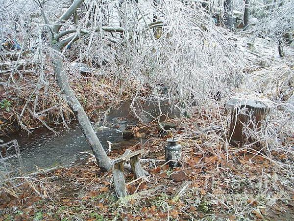 After The Ice Storm In Maine Print by Jeannie Atwater Jordan Allen