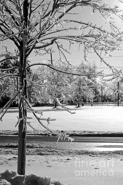 After The Ice Storm Print by Lila Fisher-Wenzel