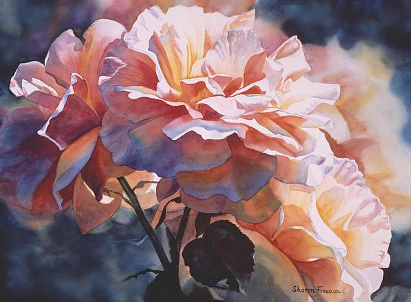 Sharon Freeman - Afternoon Rose