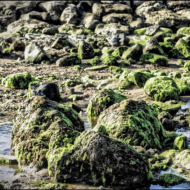Algae Rocks Photograph  - Algae Rocks Fine Art Print