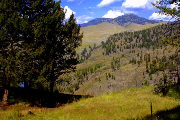 Along The Hell Roaring Creek Trail Print by Marty Koch