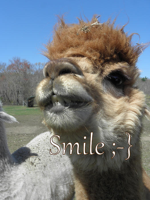 Kim Galluzzo Wozniak - Alpaca Smile