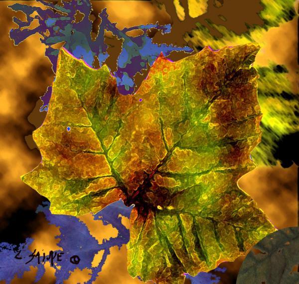 Amber Leaf By Carolyn Saine