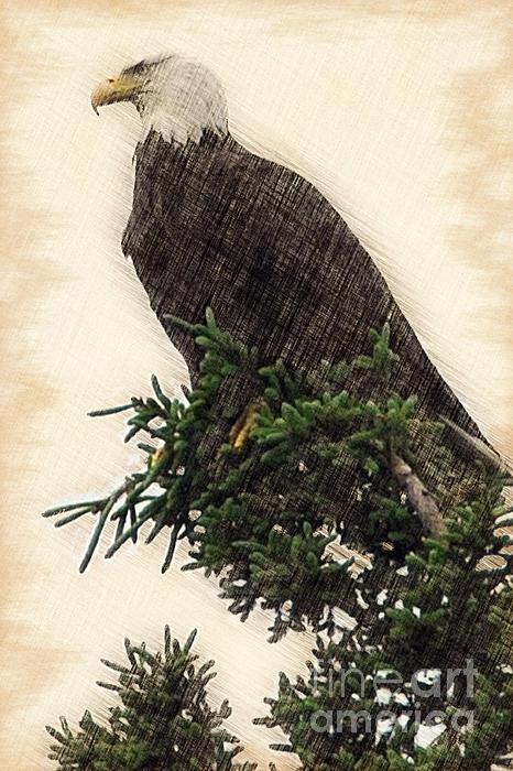 American Bald Eagle In Tree Print by Dan Friend