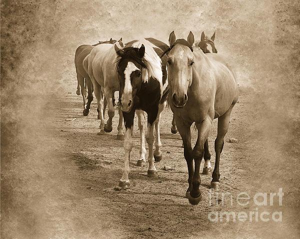 American Quarter Horse Herd In Sepia Print by Betty LaRue