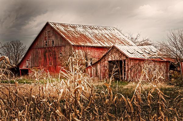 America's Small Farm Print by Randall Branham