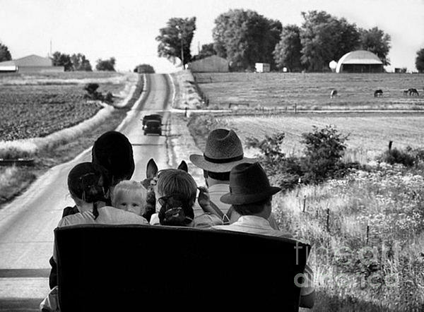 Amish Family Outing Print by Julie Dant