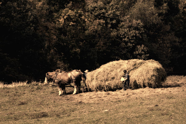 Amish Hay Wagon Print by Tom Mc Nemar