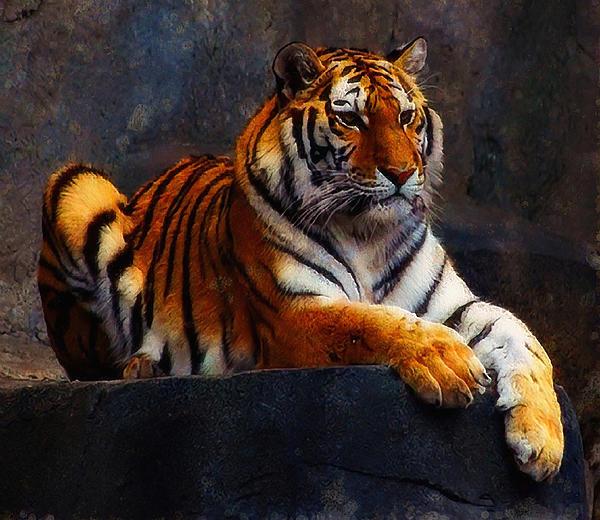 Jan Bonner - Amur Tiger I