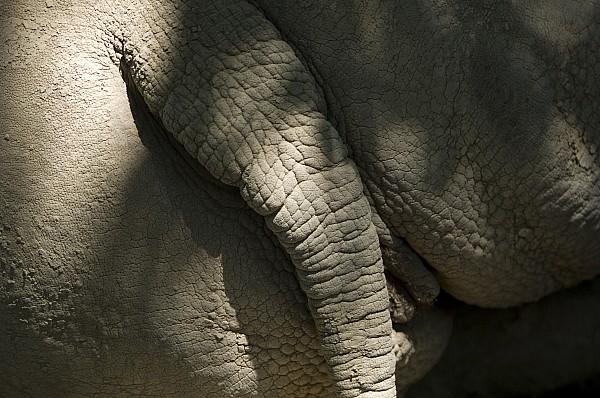 An African Elephants Rear End Print by Joel Sartore