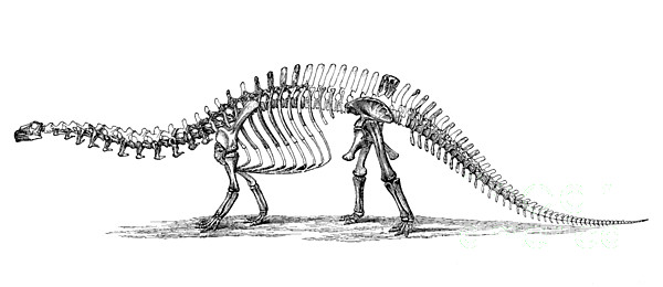 Apatosaurus Excelsus,  Aka Brontosaurus Print by Science Source