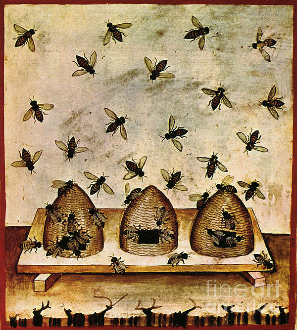 Apiculture-beekeeping-14th Century Print by Science Source