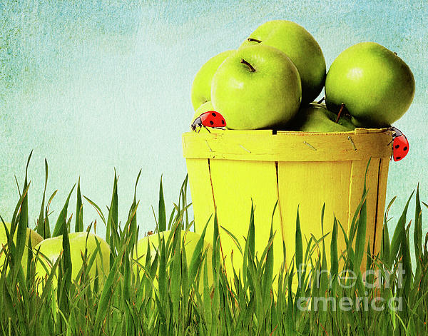 Apple Print by Angela Doelling AD DESIGN Photo and PhotoArt
