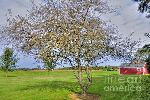 Apple Tree Print by Kathleen Struckle