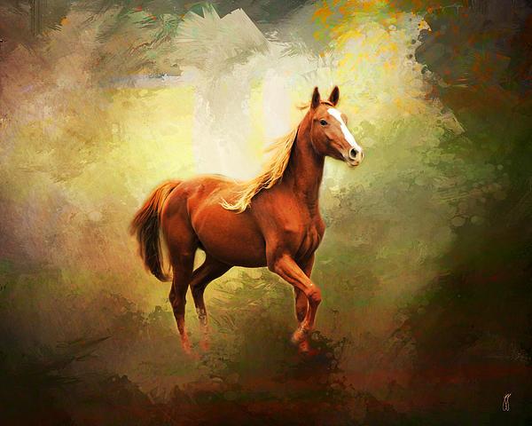 Arabian Horse Photograph