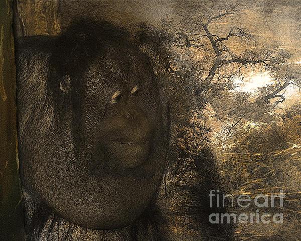 Arne Hansen - Arboreal Dreams