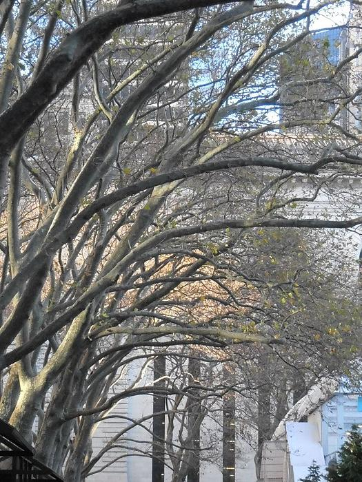 Arched Trees Print by Kimberly Perry