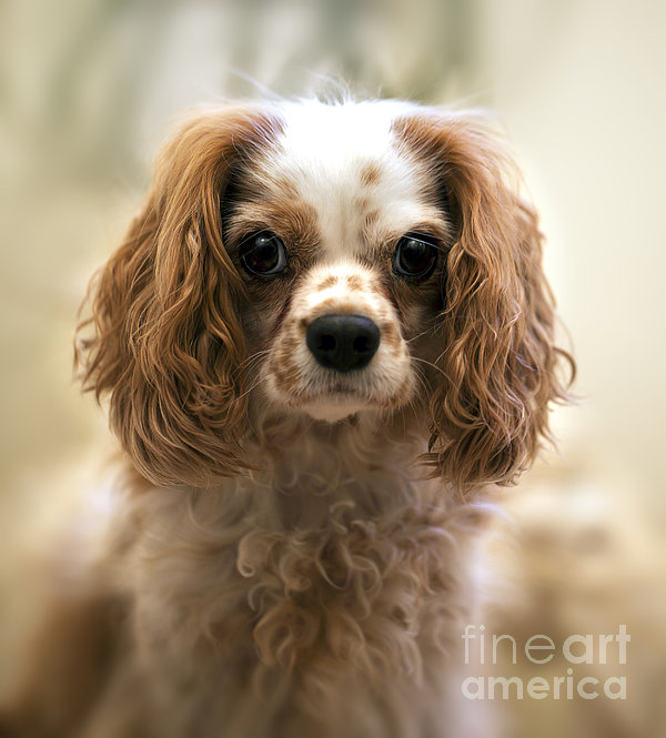 Archie Portrait Print by Jane Rix