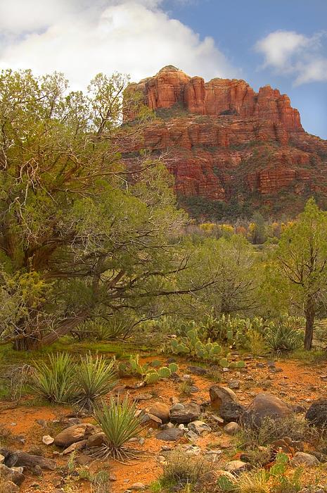Arizona Outback 3 Print by Mike McGlothlen