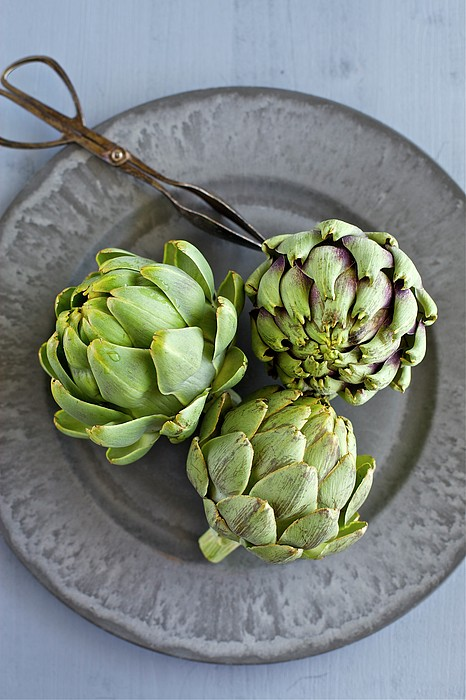 Artichokes Print by Ingwervanille