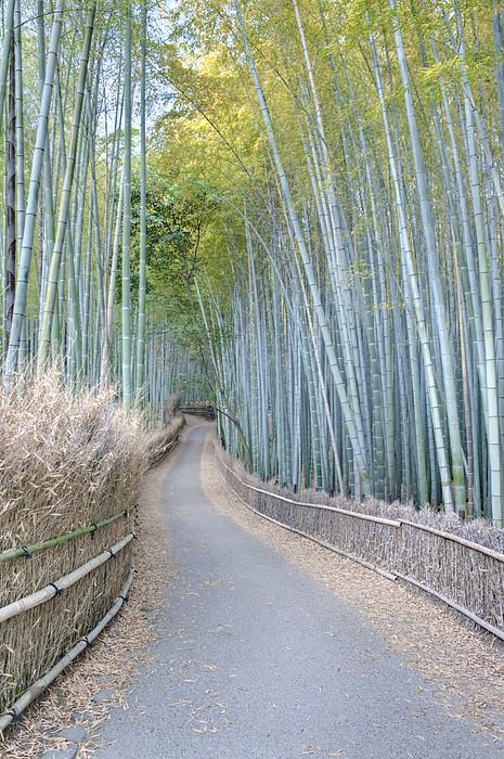 Asia Japan Kyoto Arashiyama Sagano Print by Rob Tilley