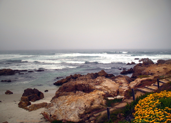Joyce Dickens - Asilomar Beach Pacific Grove CA USA