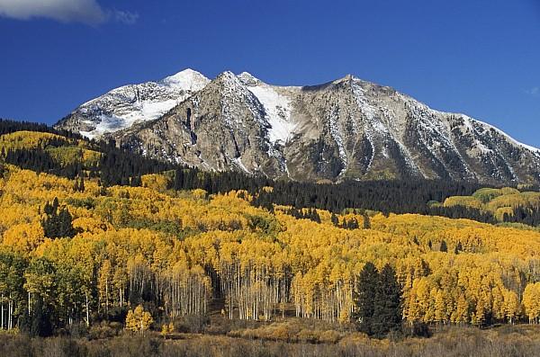 Aspen Trees In Autumn, Rocky Mountains Print by David Ponton