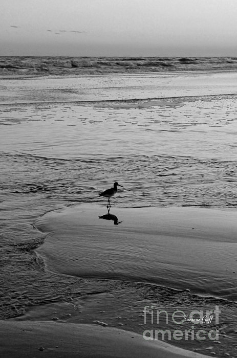 At Twilight In Black And White Print by Suzanne Gaff