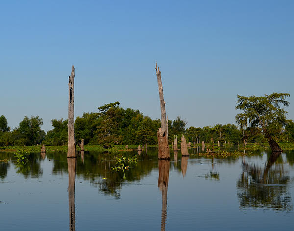 Maggy Marsh - Atchafalaya Basin 18