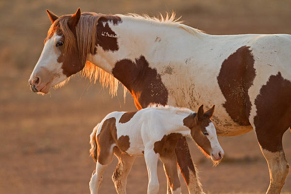 Sandy Sisti - August Foal