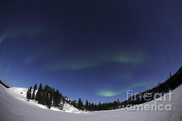 Aurora Over Vee Lake, Yellowknife Print by Yuichi Takasaka