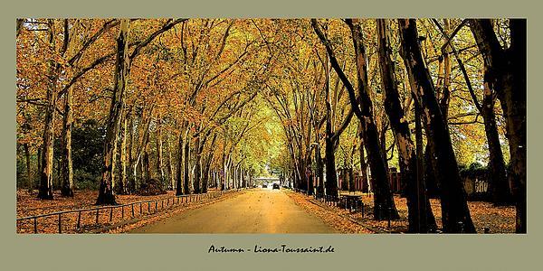 Autumn Avenue Print by Liona Toussaint