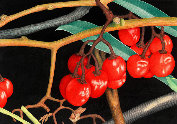 Norm Holmberg - Autumn Berries