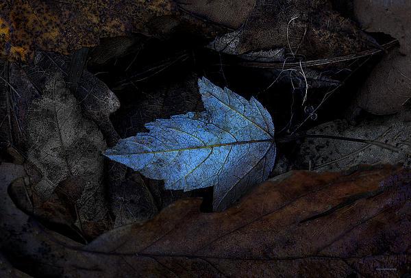 Autumn Blue Print by Ron Jones
