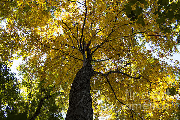 Autumn Colors Print by Darleen Stry
