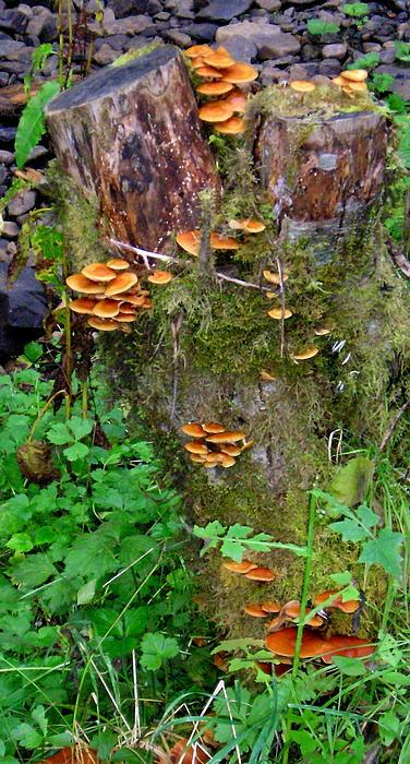 Helen Fern - Autumn Fungi