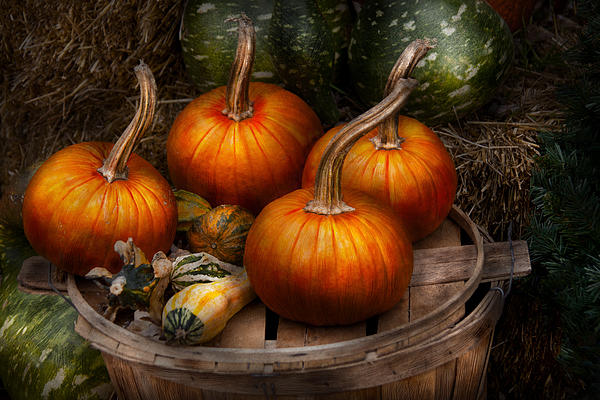 Autumn - Gourd - Pumpkins And Some Other Things  Print by Mike Savad